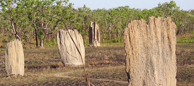 Litchfield_National_Park-Termite_mounds