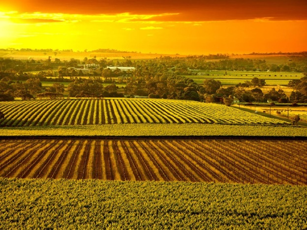barossa-valley-vienyards-at-sunset-1024x768